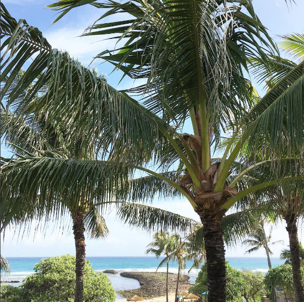 Sure, there are the usual warm-weathered vacation pics, like this one Ayesha shared of a palm tree.