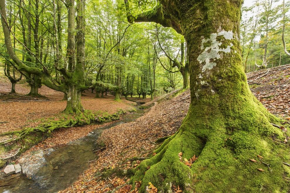 En definitiva, en Bizkaia no hay nada que ver para los turistas, solo hay árboles. ¿Y qué pueden tener de bonito unos árboles?