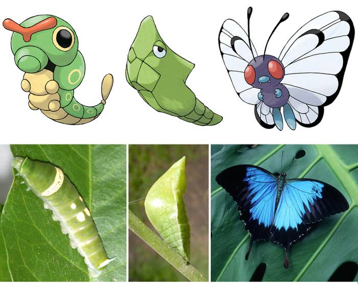 Insects transform from immature stages into adults through a series of distinct stages known as metamorphosis. These stages usually include egg, larva, pupa and adult.