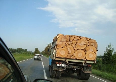 Estos troncos.
