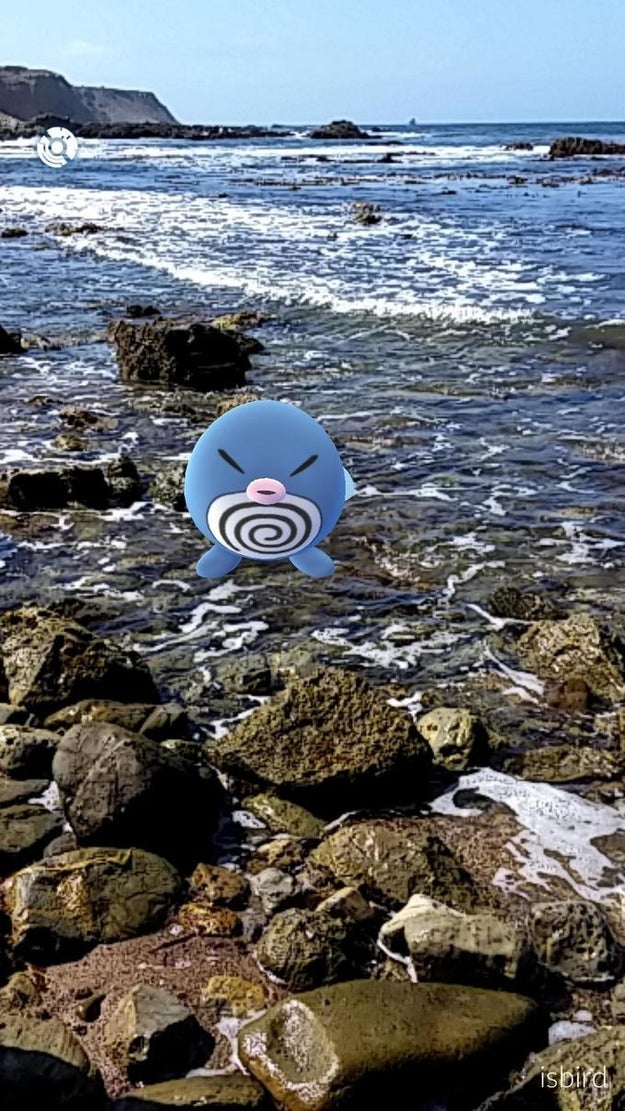 Poliwag meditates to the sounds of the ocean on this gorgeous rocky shore.