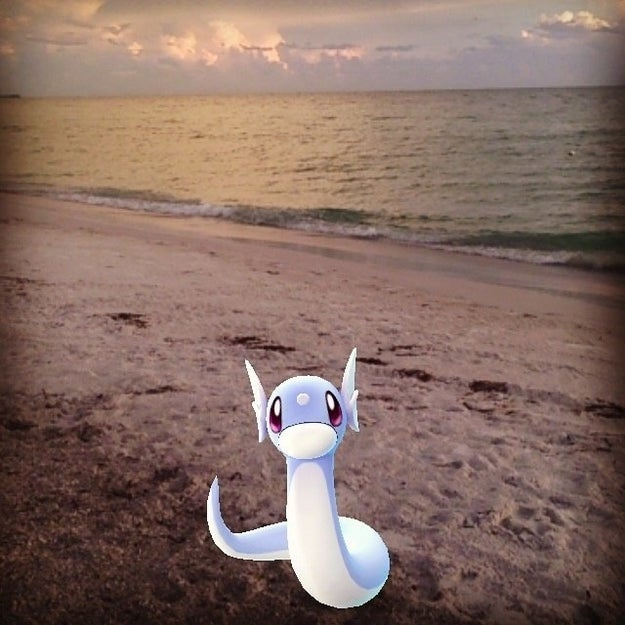 Dratini dreams of joining Khaleesi one day in Florida Beach.
