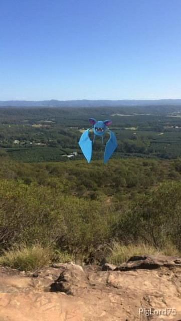 Zubat makes it to the highest point of the mountain in order to look upon his many acres of land.