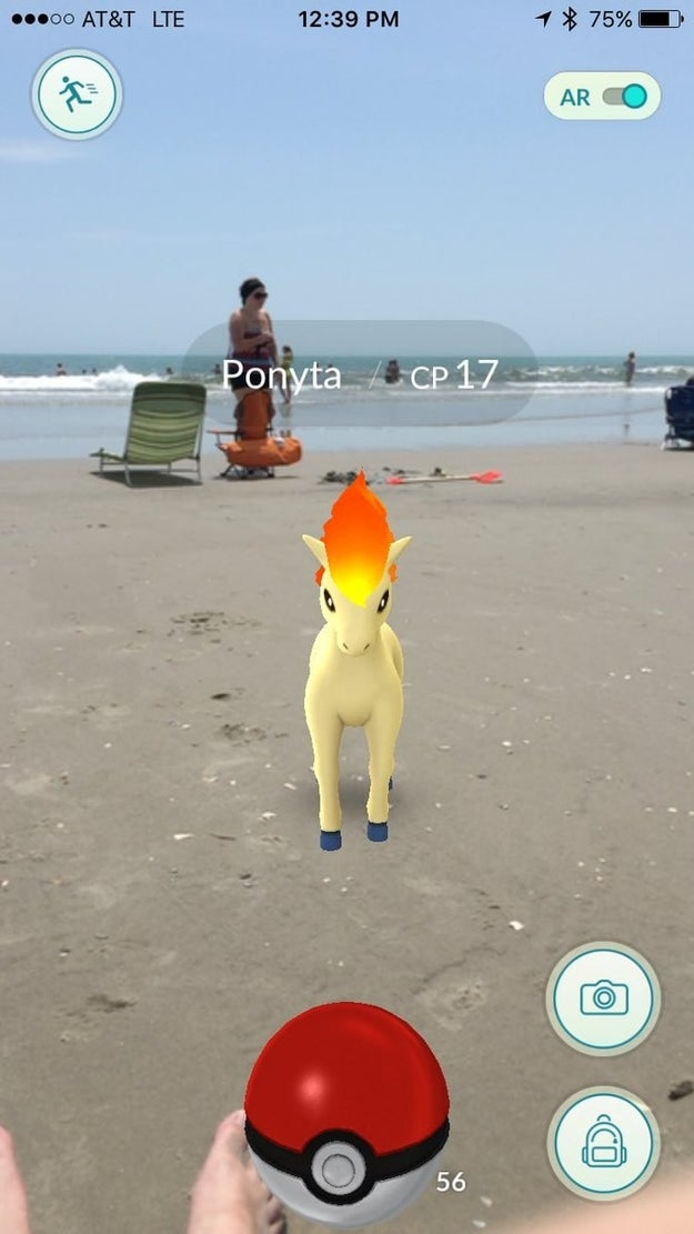 Ponyta catches some rays and chases seagulls at the beach.