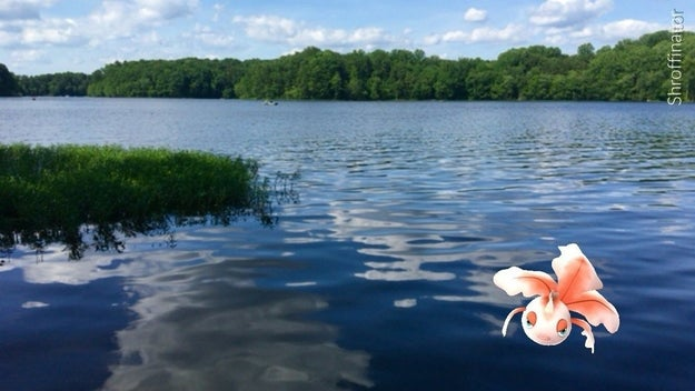 Goldeen surfaces after swimming many kilometers in this shimmering lake.