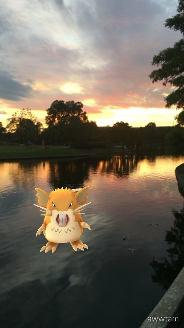 Raticate watches a sunset as beautiful as she is at the Parthenon in Nashville.