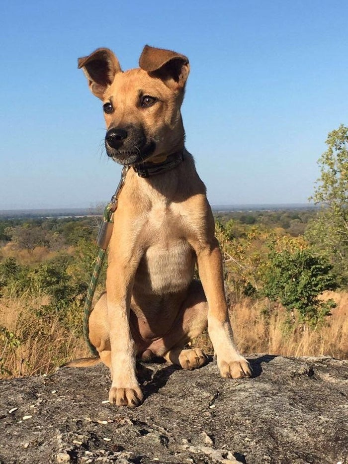 She's the first Canis africanis — better known as your average African village mutt — to be trained for a canine anti-poaching unit.