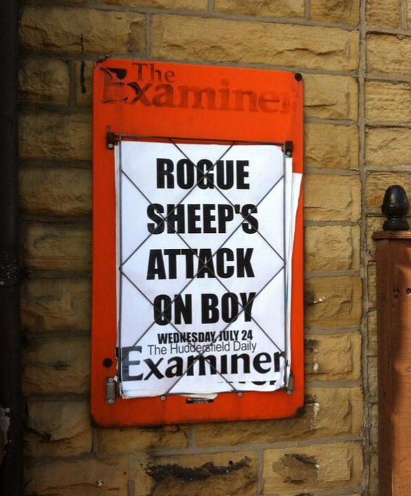 "No sign of the sheep's side of the story, is there? You say ""rogue"", I say ""fiercely independent""!"