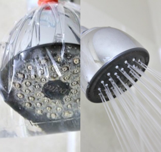 Tie a ziplock bag filled with vinegar on your shower head overnight to get rid of buildup.