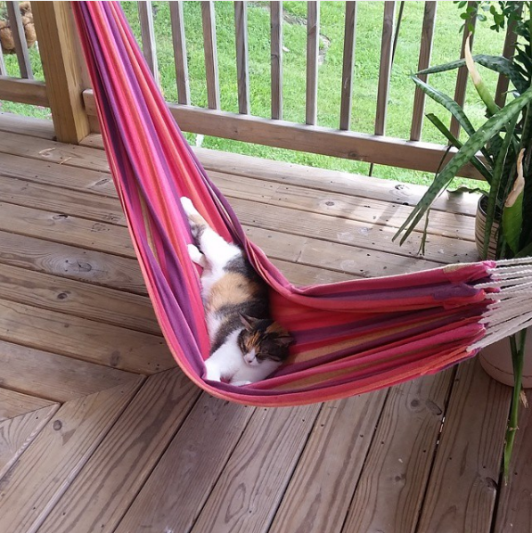 And what better way to spend those nine lives than with a personal hammock?