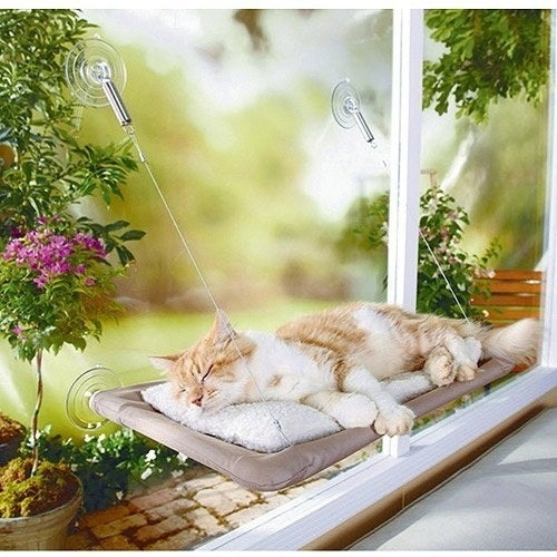 """Like this window-mounted """"sunny seat."""""""