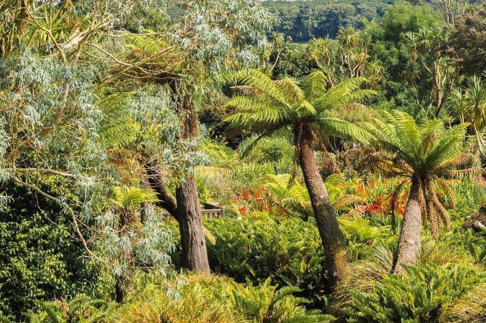 Logan Botanic Garden, Scotland