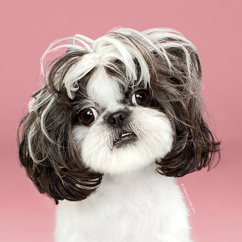 grid-cell-6576-1469725634-7 - Doggies before and after haircuts - Photos Unlimited