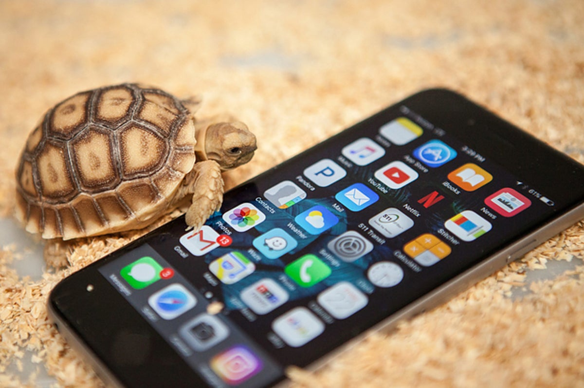 How Sulcata Tortoises Became America S Most Adorable Mistake