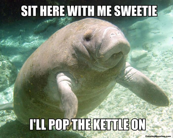 This charming website has endless images of kindly manatees, who want to help you get on with your day. I keep it open in a browser tab constantly.