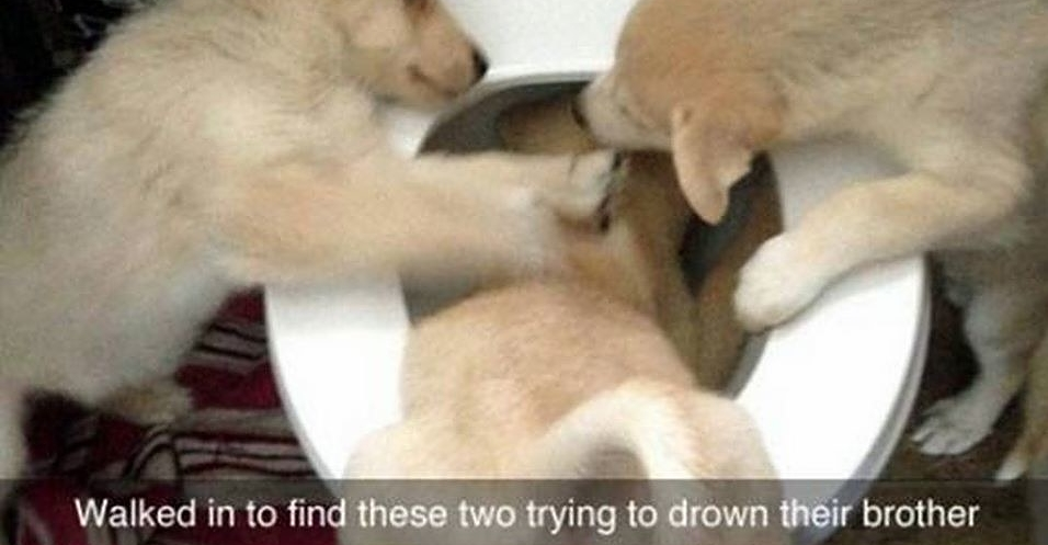 19 Animal Snapchats That Will Make You Laugh For No Reason