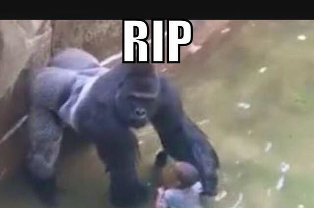 facebook memes compare aboriginal athlete to gori 2 24152 1469774670 1_dblbig facebook memes compare aboriginal athlete to gorilla that was