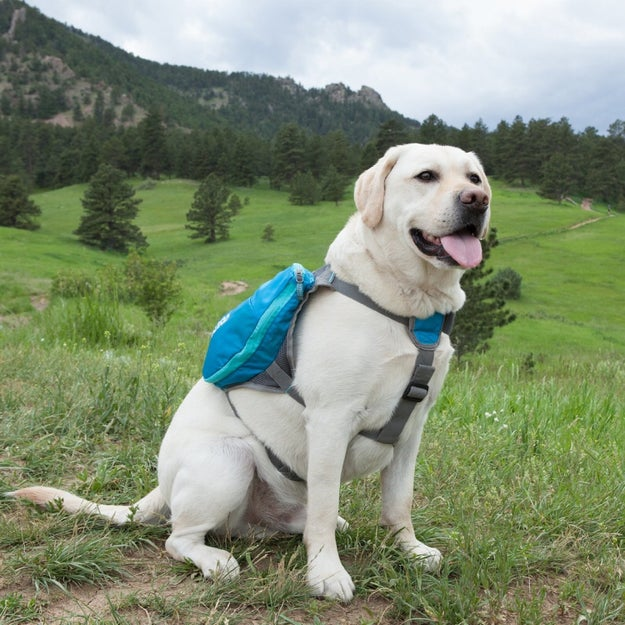 A saddlebag for the generous dog who wants to help their owner carry things.