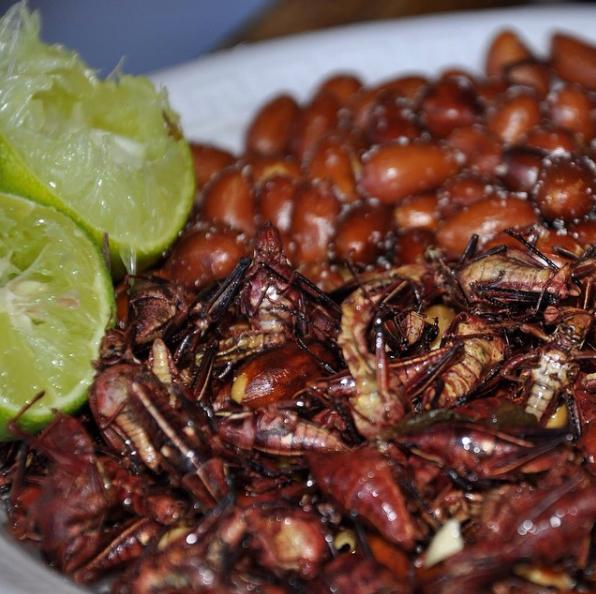 El que no haya comida insectos no sabe nada de la vida.