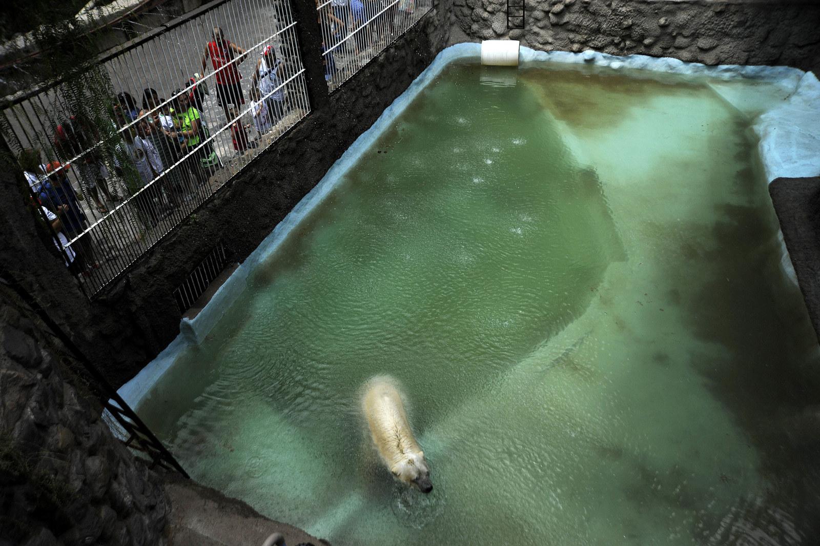 O urso polar mais triste do mundo morreu