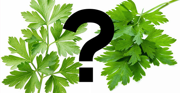 Finding The Coriander In This Quiz Will Be The Hardest Thing You Do Today