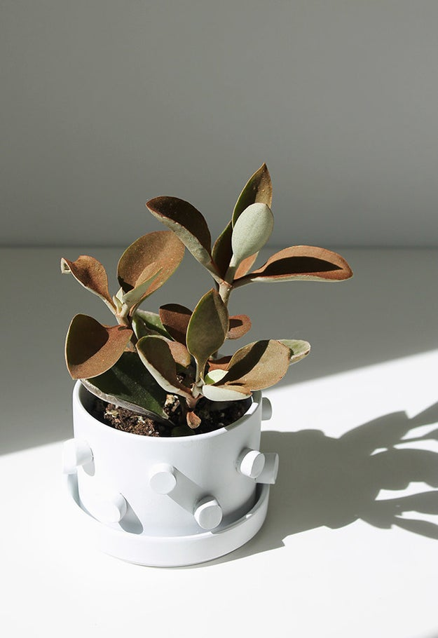 Create a 3D pot for your favorite plant to live in.