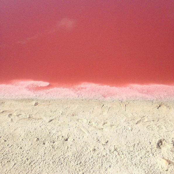 Hay una gran concentración de sal, microorganismos y halobacterias que hacen que el agua se vea rosa.
