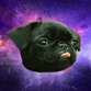 puggerflies profile picture