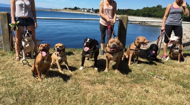Part of the reason they started the group was to address the stereotypes about aggression in pit bulls, which makes what happened next all the more strange.
