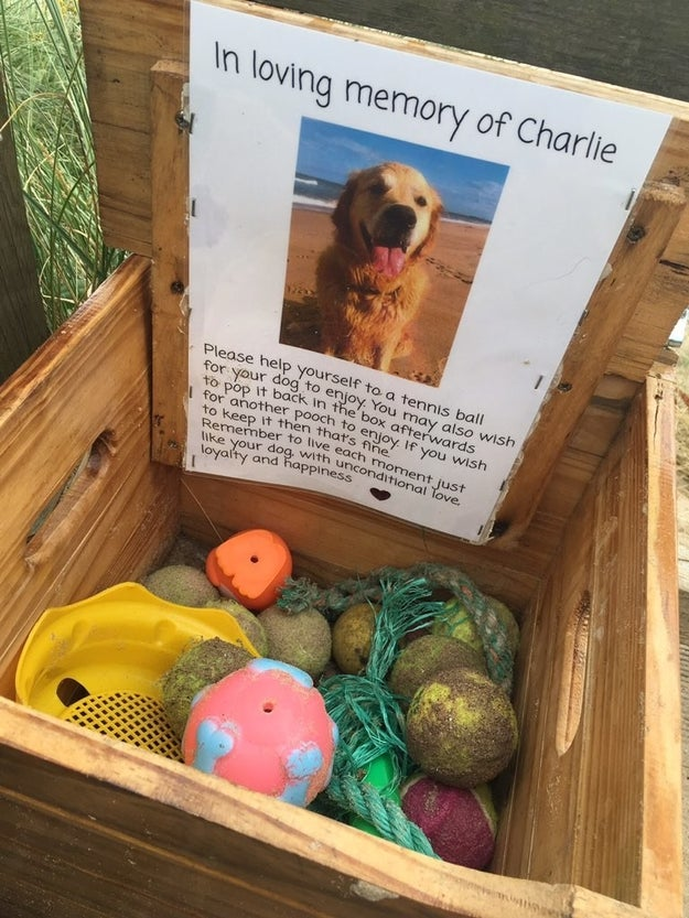 """Someone had left the crate """"in loving memory of Charlie,"""" a dog who recently died. It was filled with old tennis balls and doggie toys for other dogs to enjoy. And if someone's dog wished to keep the ball or toy, """"then that's fine,"""" a note said."""