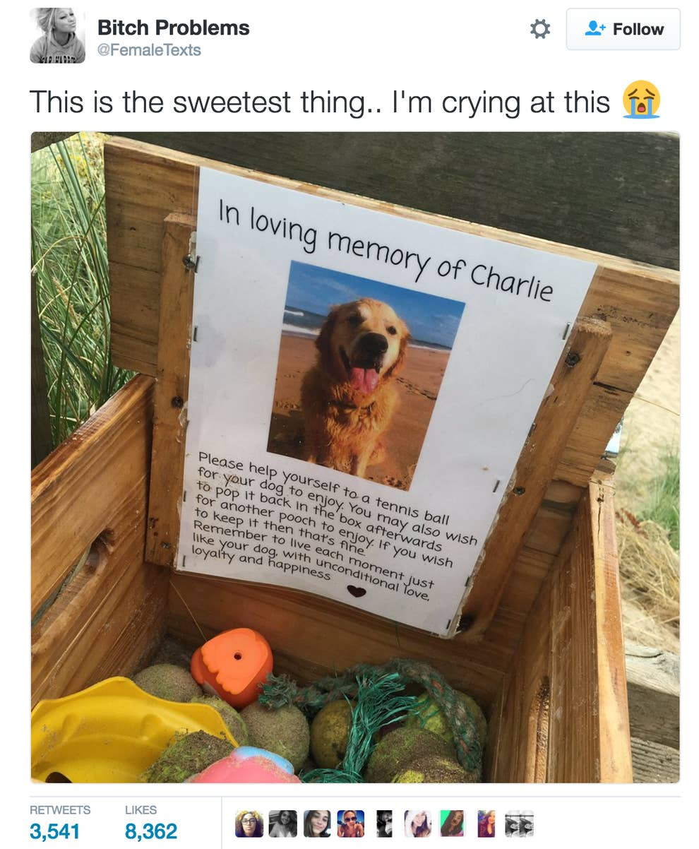 People Are Crying Over This Adorably Sweet
