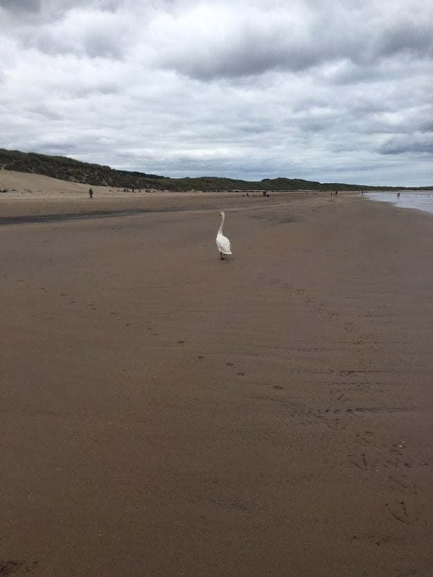 Sanderson told BuzzFeed she was walking along Druridge Bay when she saw the box, and was immediately moved by it.