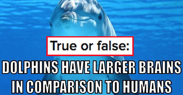 Dinosaur Ghosts - ProProfs Quiz