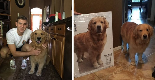 Dog Cardboard Cutout Uk