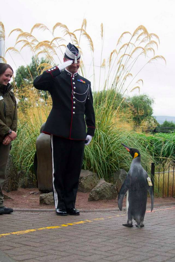 The penguin is named after Major Nils Egelien, and King Olav, who took part in his adoption in 1972.