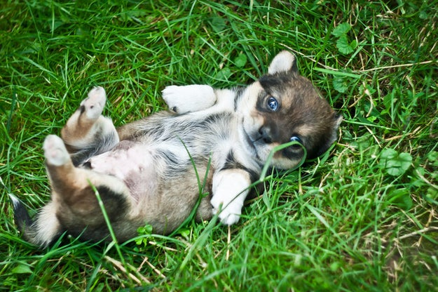 Look, things are about to get really gross. If you want, you can just look at this puppy tummy and turn back.