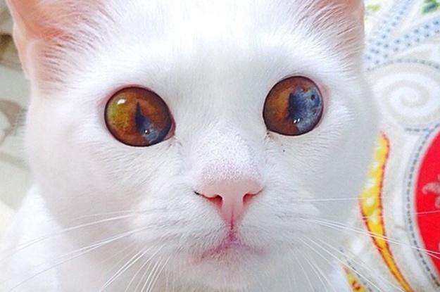 21 Hermosos gatos que tienen ojos más bonitos que tú