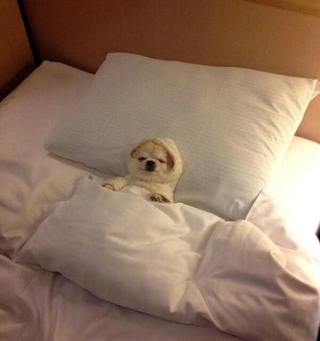 Pero al final del día las responsabilidades son demasiadas y sabes que tienes que afrontarlas, lejos de tu cama :(