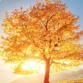 treecareplano