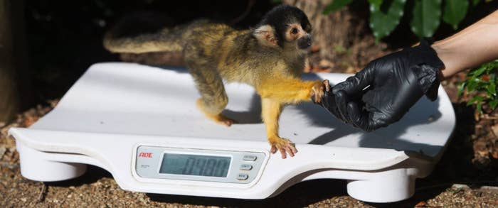 Whether big or small, every critter had their measurements recorded and added to an international database for zoos all over the world to see.