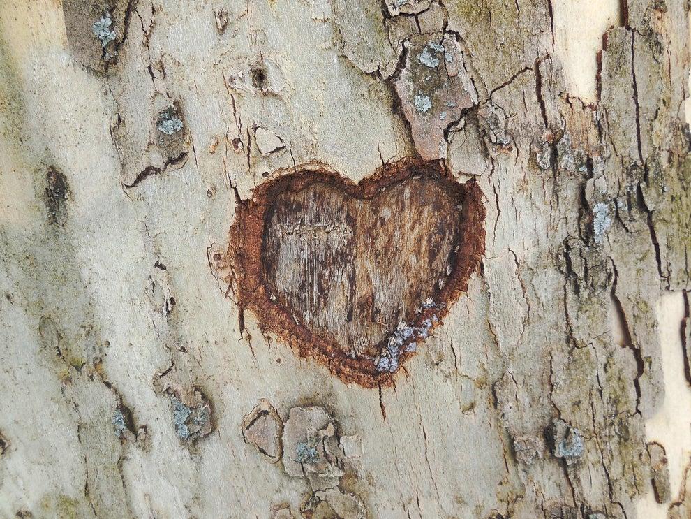 En la madera de un árbol.
