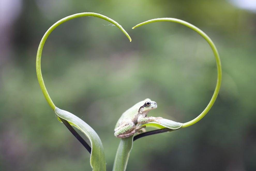 En una comunión entre flora y fauna.