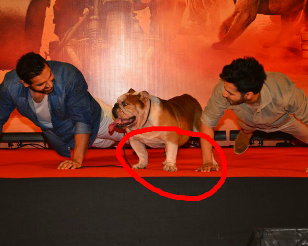 This deceitful dog has simply fooled two A-list actors into believing that he is actually putting any effort into doing any real push-ups.