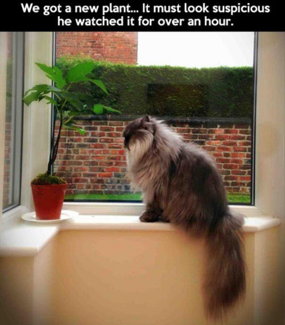 Cats will be overly suspicious of an immobile house plant.