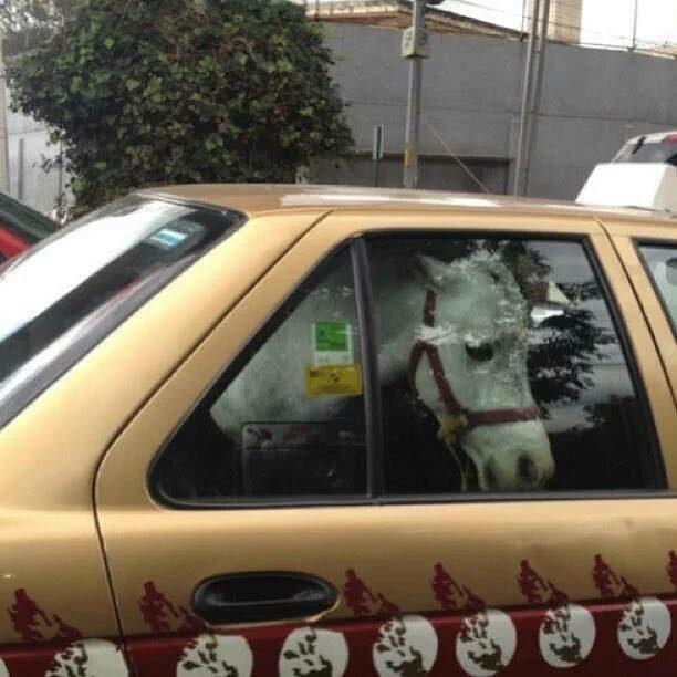 Cuando le llamaron un taxi al burro.