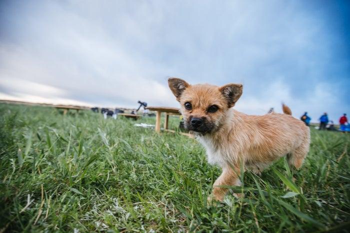 「走り始めるとすぐ、その犬は、僕の派手な黄色のゲートルが気に入ったらしく、横に来て、一緒に走り始めたんだ」と、レオナルドは『4 Deserts』というマラソン専門のウェブサイトで語っている。