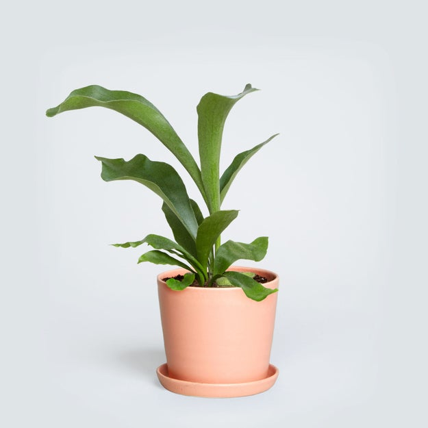 Office desk plants looks awesome which are best plant for Plants that need little maintenance