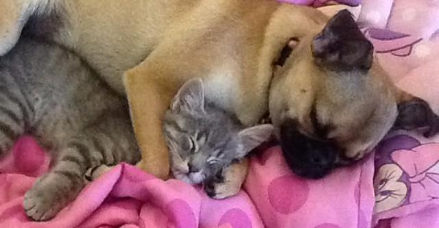 18 Cats And Dogs Who Just Want To Nap Together Fur-Ever And Ever