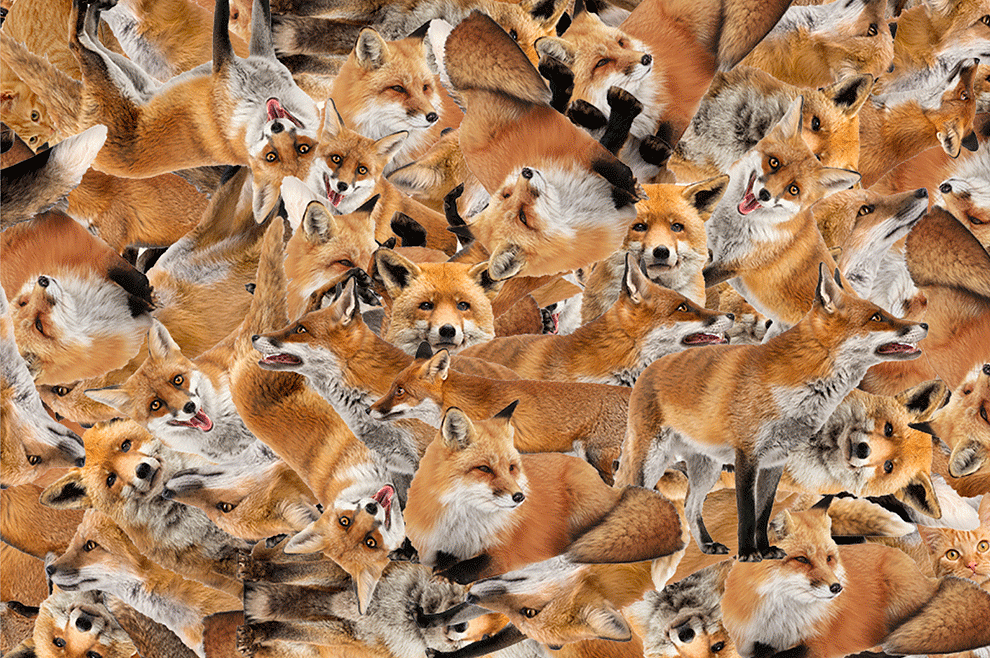 Do You Have Time To Find All Ten Cats Hiding Among These Foxes