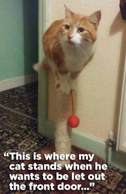 cat exam cracking tips